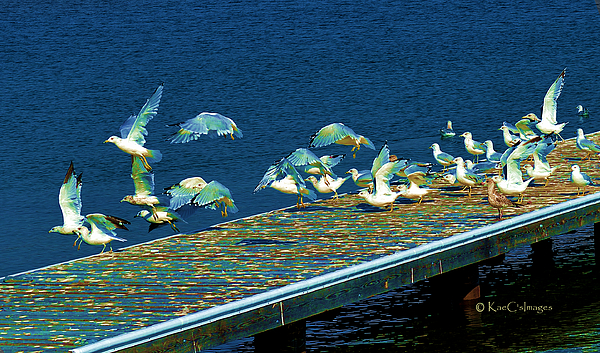 Wildlife Digital Art - Psychedelic Gulls by Kae Cheatham