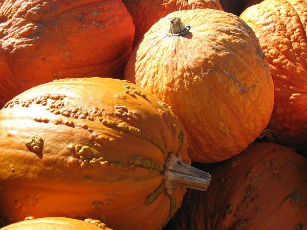 Pumpkin Photograph - Pumpkin Shadows by Cindy Plutnicki