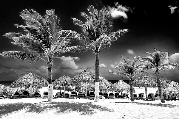 Palm Tree Photograph - Punta Palms by John Rizzuto