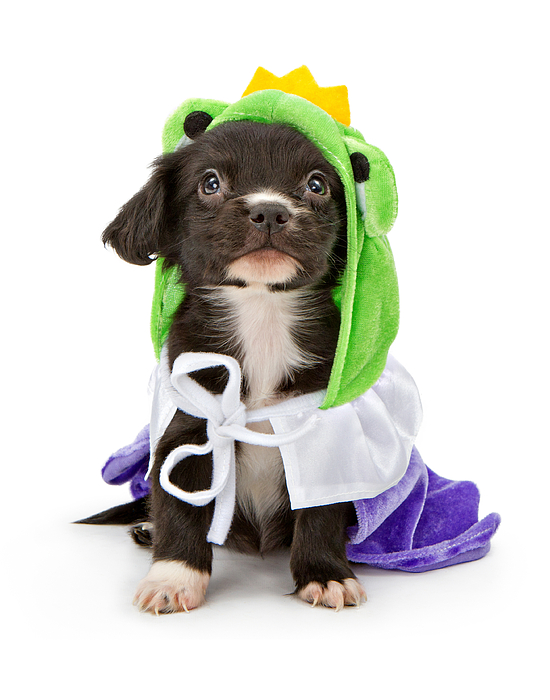 Adorable Photograph - Puppy Frog Prince by Susan Schmitz