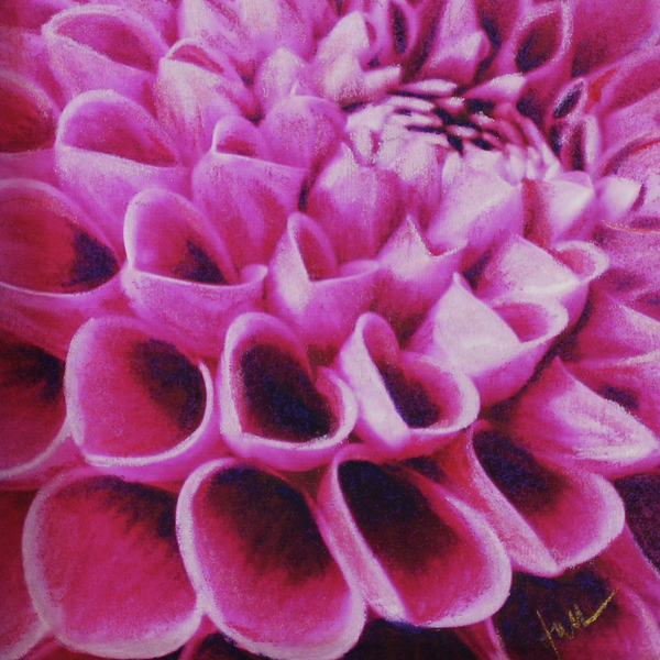 Lavender Pastel - Purple Dahlia by Janice Lawrence