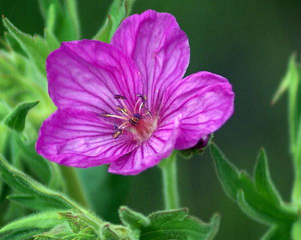 Wildflower Photograph - Purple Flower 2 by Marty Koch