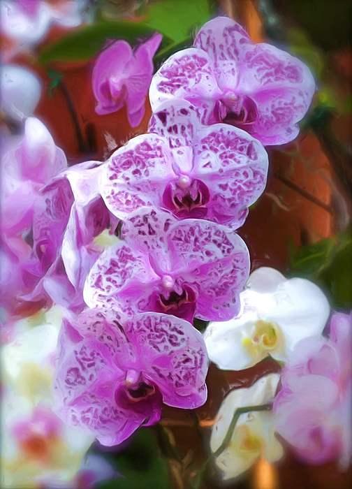Purple Flower Photograph by Ralph Liebstein