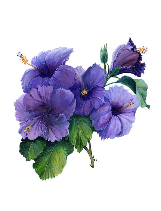 Purple Hibiscus Print By Marilyn Moskowitz