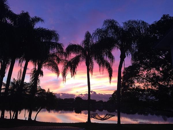 Photo Photograph - Purple Sunrise  by Lisa Bentley