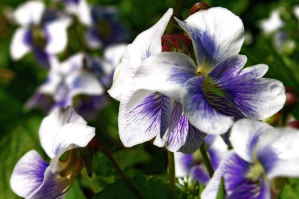 Michigan Photograph - Purple Veins  by Scott Hovind