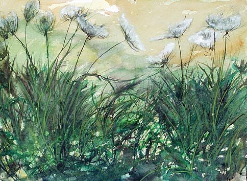 Watercolor Painting - Queen Anns Lace by Jody  Fallon