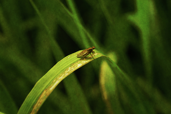 Bug Photograph - Quiet Time by Terrie Taylor