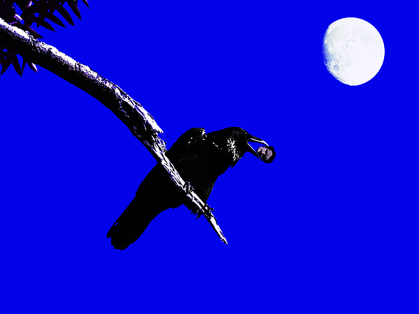 Goth Photograph - Quoth The Raven Nevermore . Blue by Wingsdomain Art and Photography