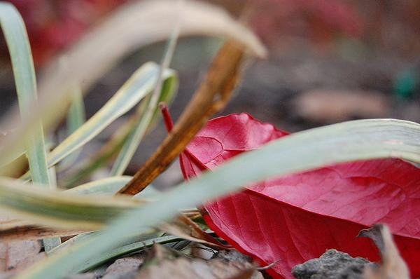 Grass Photograph - Rad Leaf by Kristin Britt