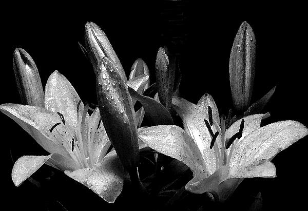 Flowers Digital Art - Rain by Burton Floyd