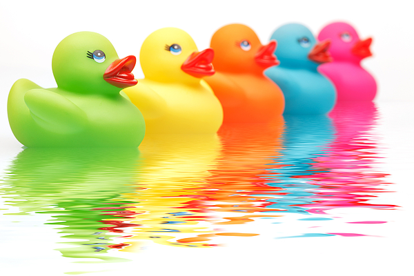 Colourful Photograph - Rainbow Ducks by Martin Williams