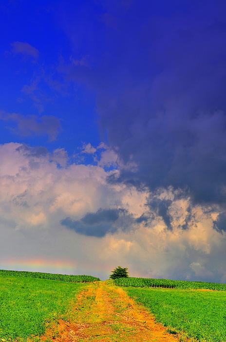 Rainbow Photograph - Rainbow Path by Emily Stauring