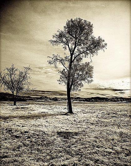 Infrared Photograph - Ramona Preserve by Eileen Mandell