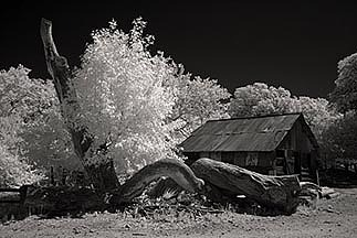 Infrared Photograph - Ramsey Canyon by Eileen Mandell