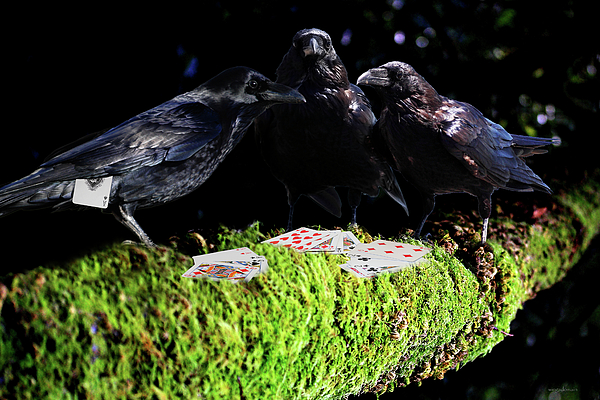 Bird Photograph - Ravens Playing Poker by Wingsdomain Art and Photography