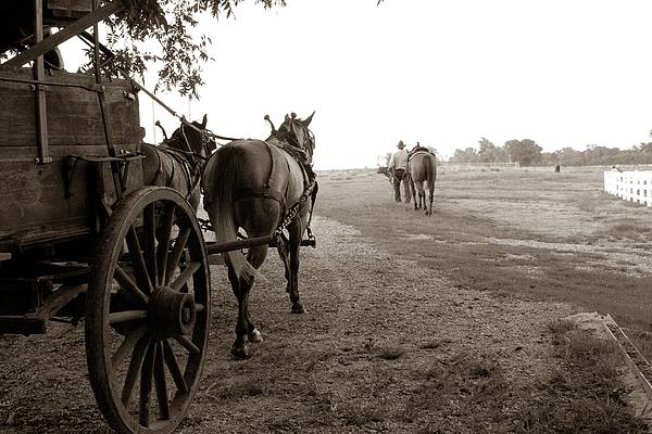 Horses Photograph - Ready For Sundown by Toni Hopper