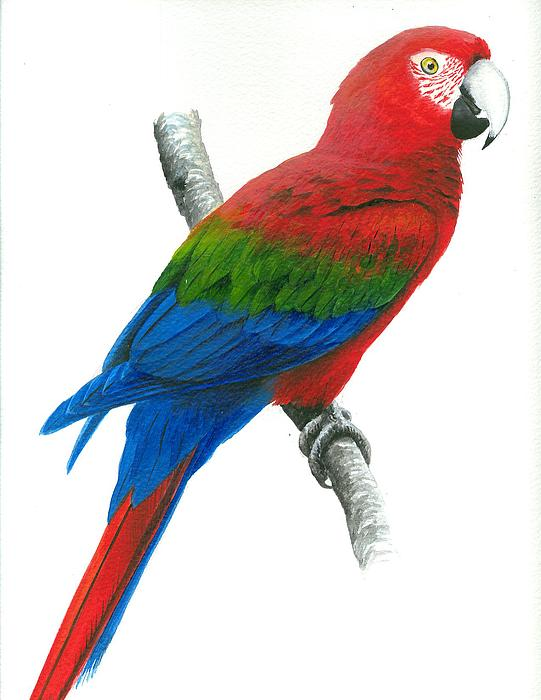 Macaw Paintings Sale