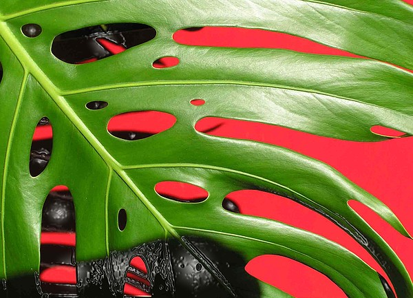 Leaves Photograph - red ang green N1 by Evguenia Men