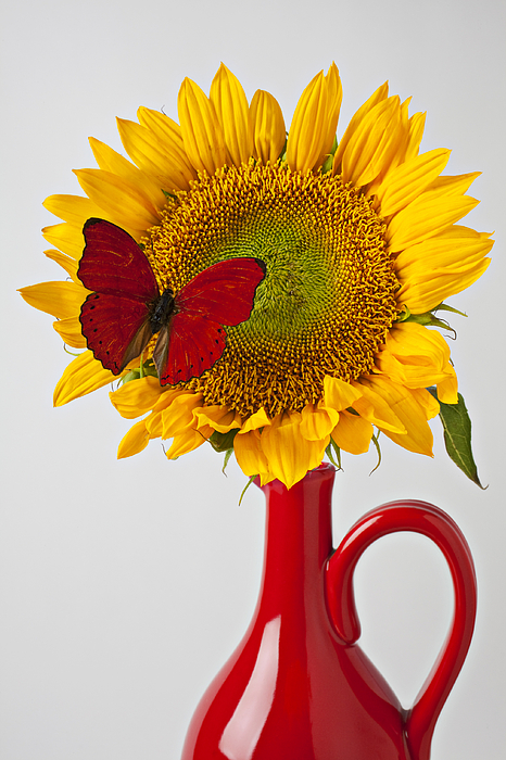 Pitchers Photograph - Red Butterfly On Sunflower On Red Pitcher by Garry Gay