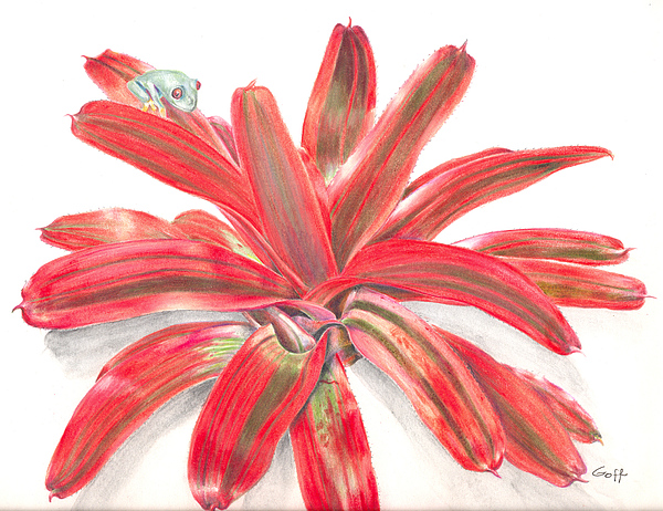 Red-eyed Tree Frog Painting - Red-eyed Tree Frog On Bromeliad by Penrith Goff