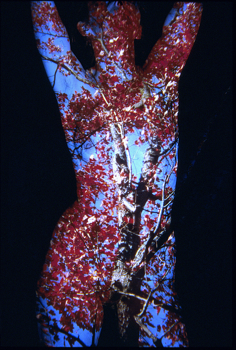 Nature Fusion Photograph - Red Maple by Arla Patch