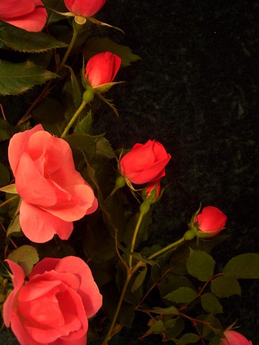 red Photograph by Nereida Slesarchik Cedeno Wilcoxon