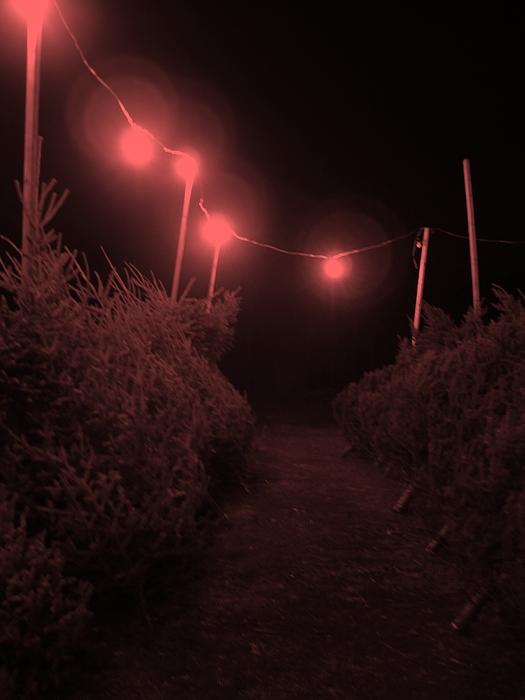 Red Night Digital Art by John  Bichler