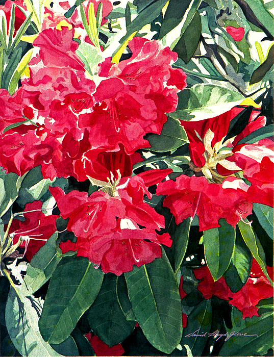 Rhododendrons Painting - Red Rhododendrons Of Dundarave by David Lloyd Glover