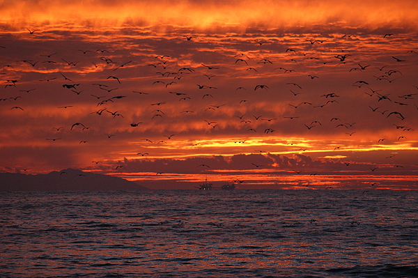 Sunset Photograph - Red Sky  by Wendy  Coloma