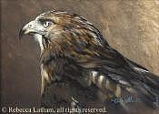 Eagle Painting - Red Tail Hawk Study by Rebecca Latham