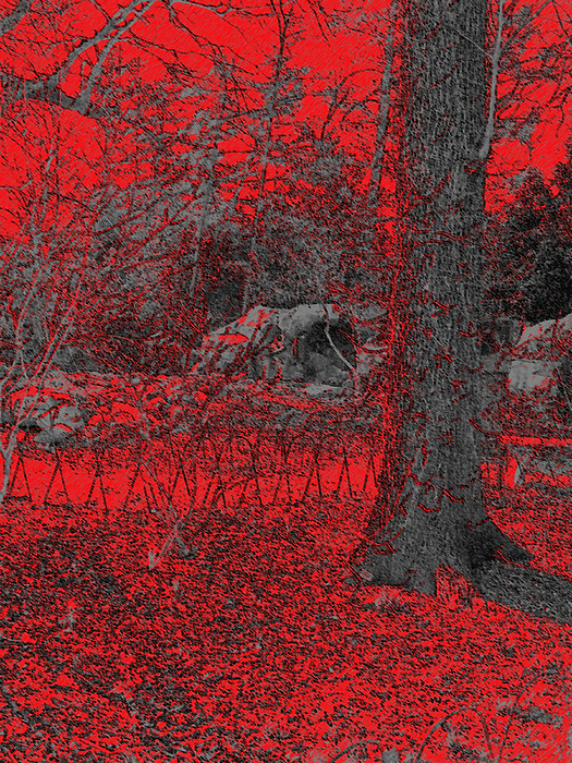 Landscape Photograph - Red Tree by B and C Art Shop
