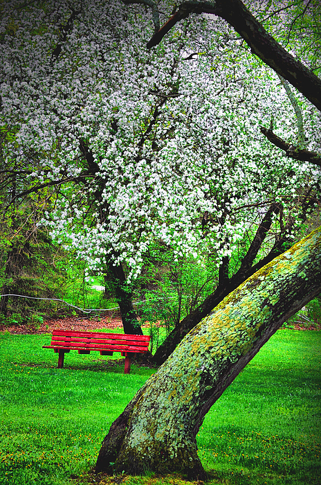 Bench Photograph - Red White And Green by Emily Stauring
