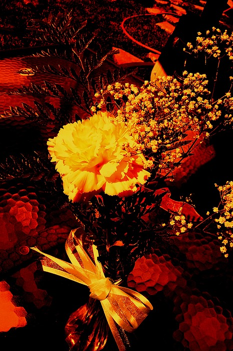 Flowers Photograph - Reds And Yellows. by Douglas Kriezel