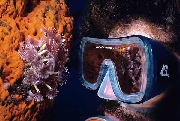 84 Photograph - Reef Reflections by Don Kreuter