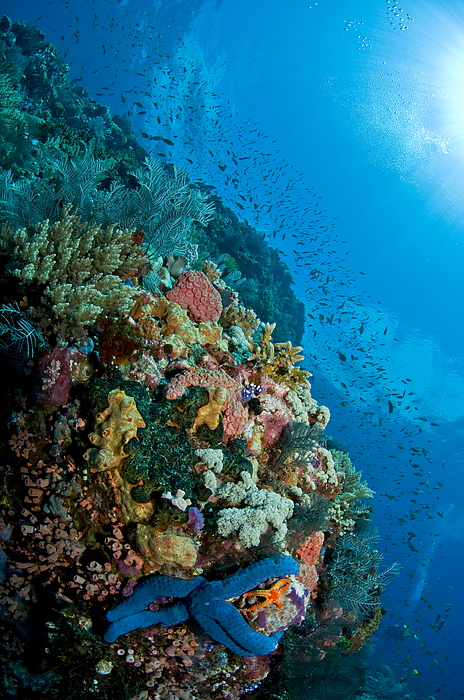 Indonesia Photograph - Reef Scene With Corals And Fish by Mathieu Meur