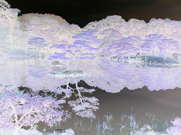 Reflection Photograph - Reflections On A Surreal Pond by Curtis Schauer