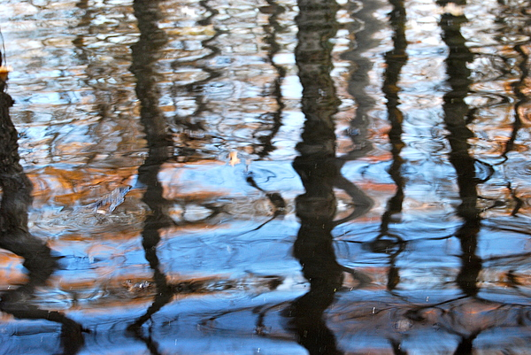 Water Photograph - Reflections by Sharrell Holcomb