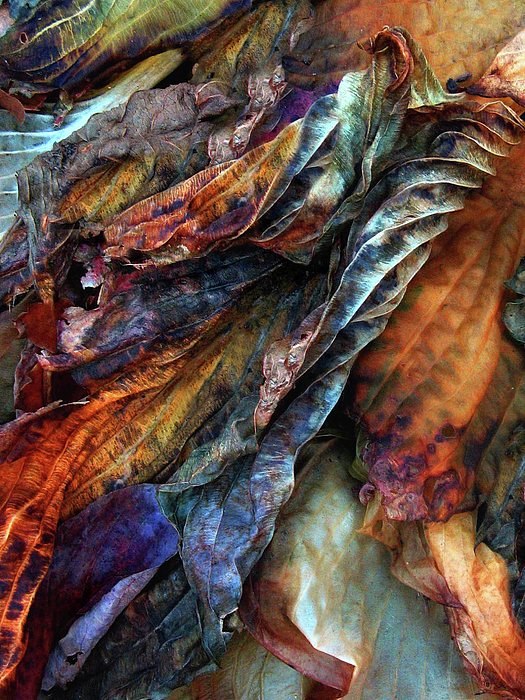 Decay Photograph - Remnants by Jessica Jenney