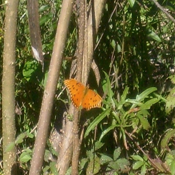 Butterfly Photograph - Resting by Carla Fionnagain