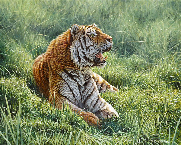 Tiger Painting - Resting In The Grass by Eric Wilson