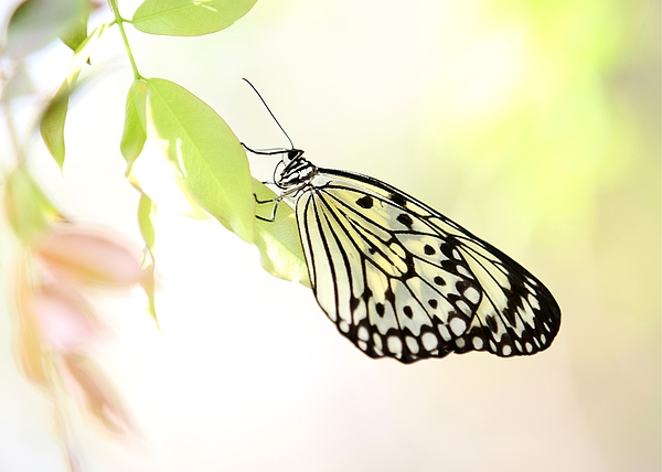 Butterfly Photograph - Rice Paper In The Garden by Sabrina L Ryan