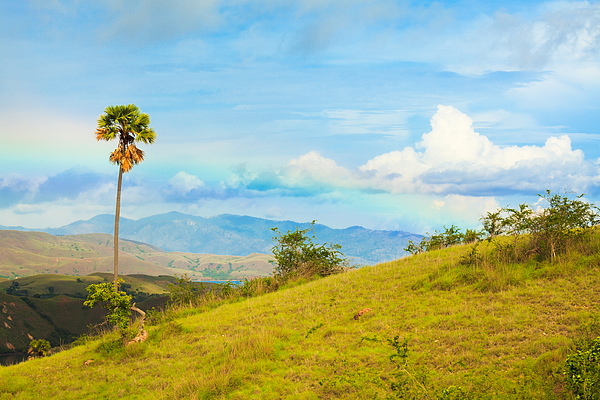 Summer Photograph - Rinca Island. by MotHaiBaPhoto Prints