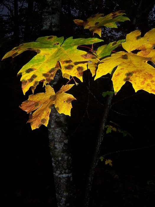 Autumn Photograph - Rings Of Green And Drown by Ken Day
