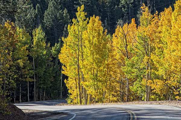 Fall Photograph - Road To Autumn by Barry C Donovan