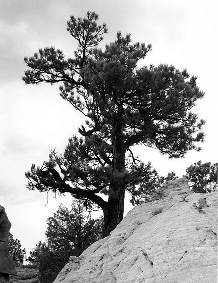 Tree Photograph - Rockclimber by Allan McConnell