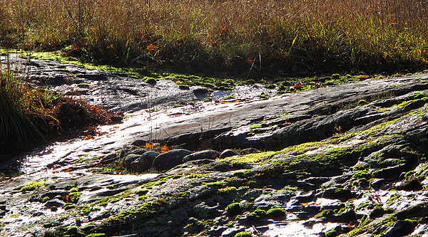 Landscape Photograph - Rocks Moss And Grass 2  by Lyle Crump