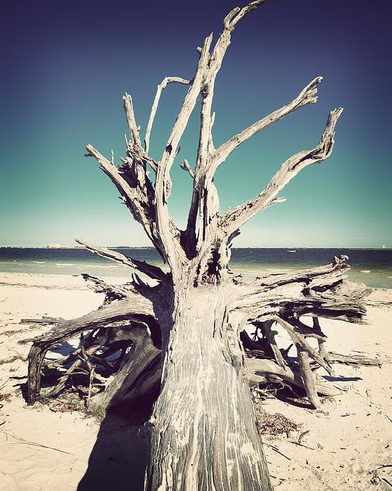 Florida Photograph - Roots To The Sky-vintage by Chris Andruskiewicz