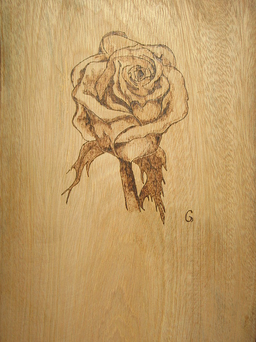 Rose Pyrography - Rose  by Carlos Gayol