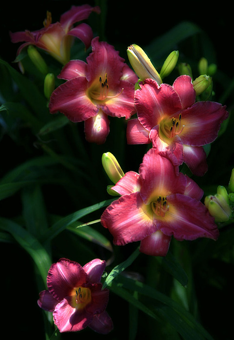 Flowers Photograph - Rose Crush by David Watkins Jr